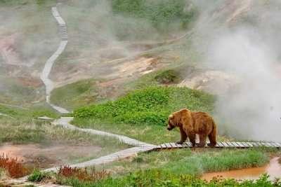 Wildlife in Russia