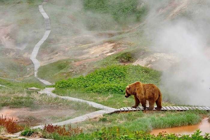 Wildlife in Russia