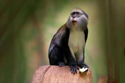 Zoos in Ghana