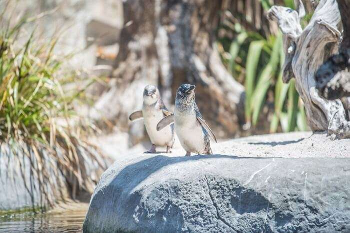 Birds of zoo