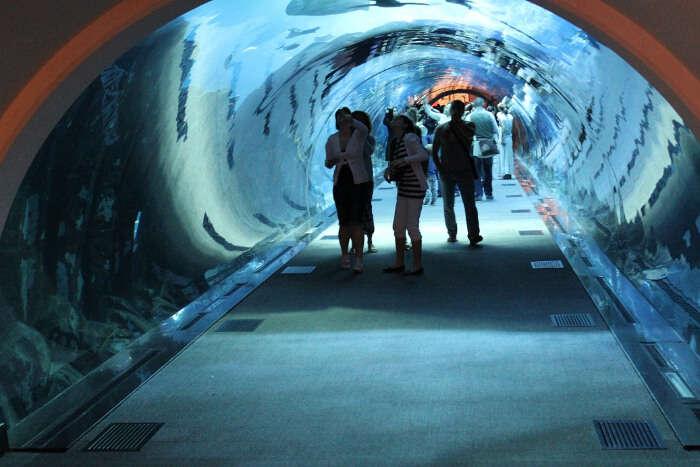 Dubai Underwater Zoo in Dubai