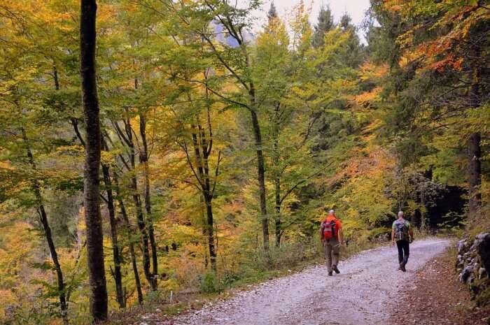 Trail Autumn Trekking Trees Walk Forest Hiking
