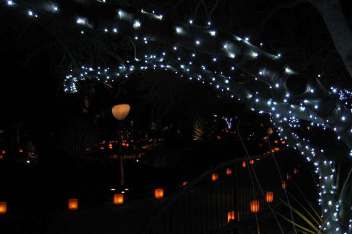 Las Noches De La Luminarias