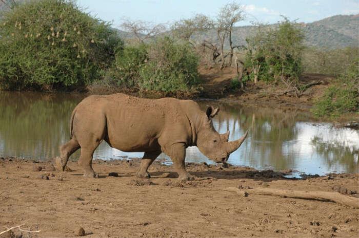 Arusha National Reserve