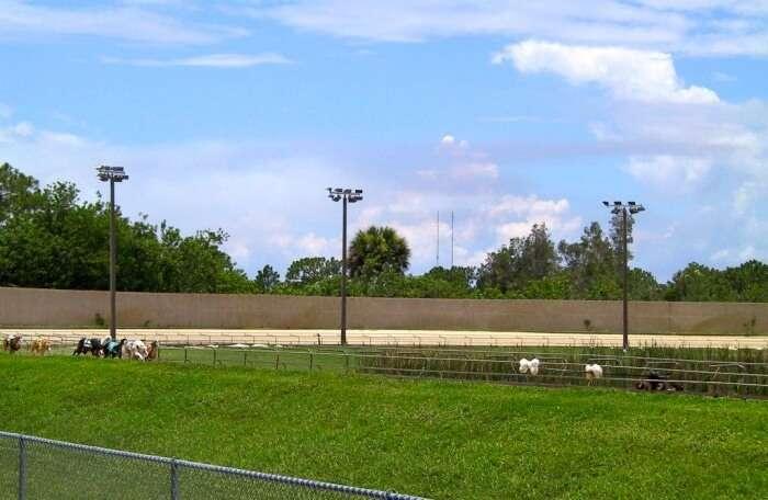 Melbourne Greyhound Park