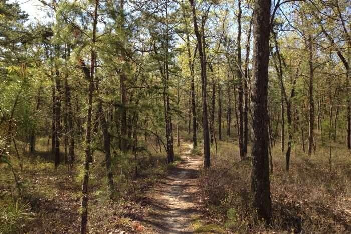 New Jersey Pinelands Reserve