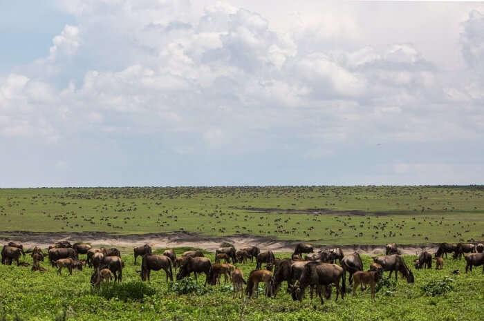 Ngorongoro Conservation Park- Olmoti Crater