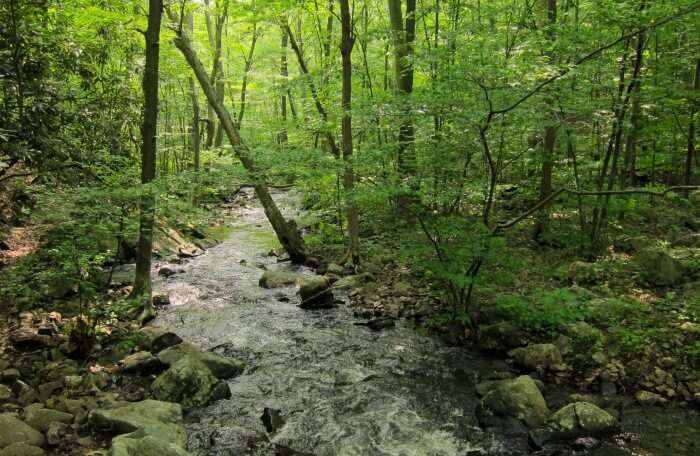 Norvin Green State Forest (Stonetown Circular)