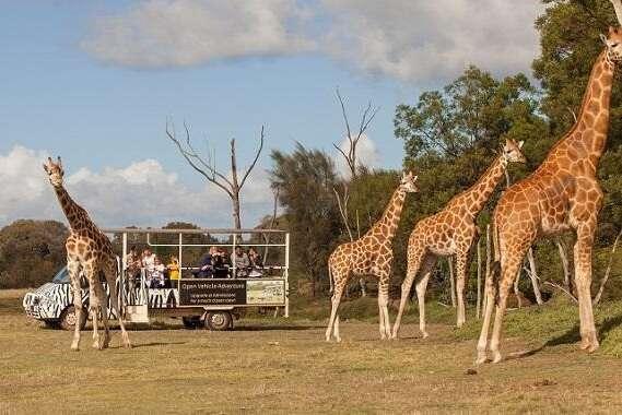 Phoenix zoo safaris