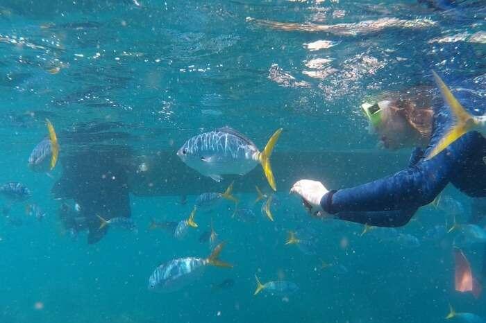 Price-Of-Snorkeling-In-Hikkaduwa