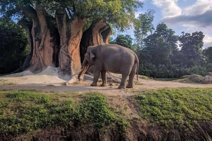 Safari Edventure