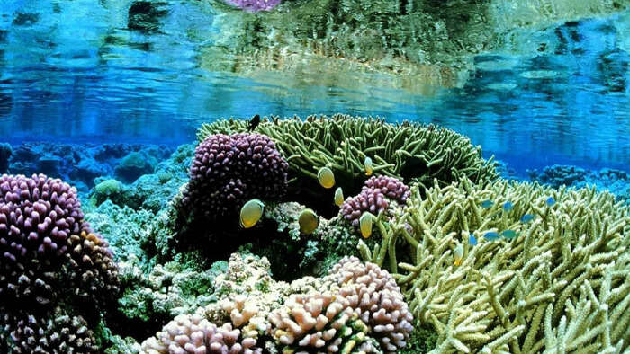Snorkel your way around the coral reefs