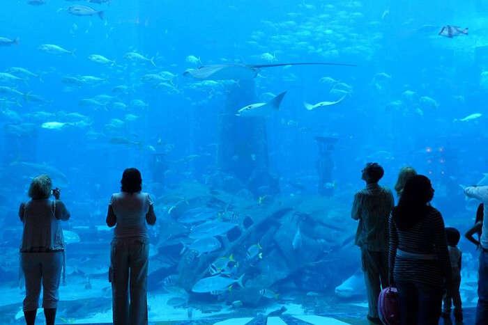 The Lost Chambers Aquarium in Dubai