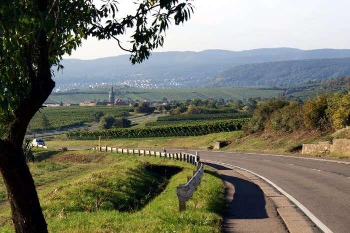 Waipara Wine Area