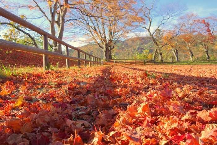 Weather During Autumn In Japan