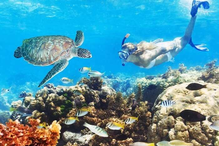 9 Dreamy Places For Snorkeling In Miami