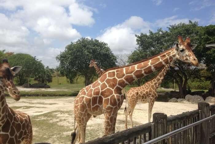 Zoo Miami