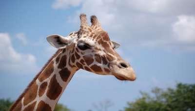 Africa Safari Adventure Park