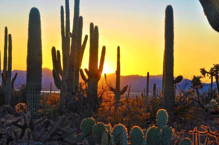 Best Phoenix National Parks
