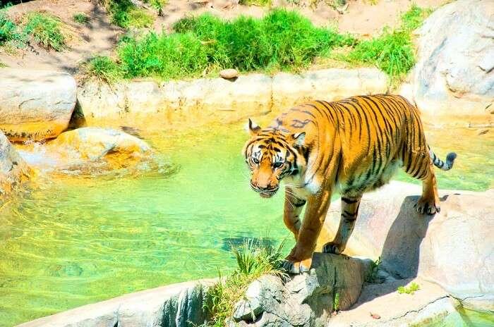 Zoos In Los Angeles