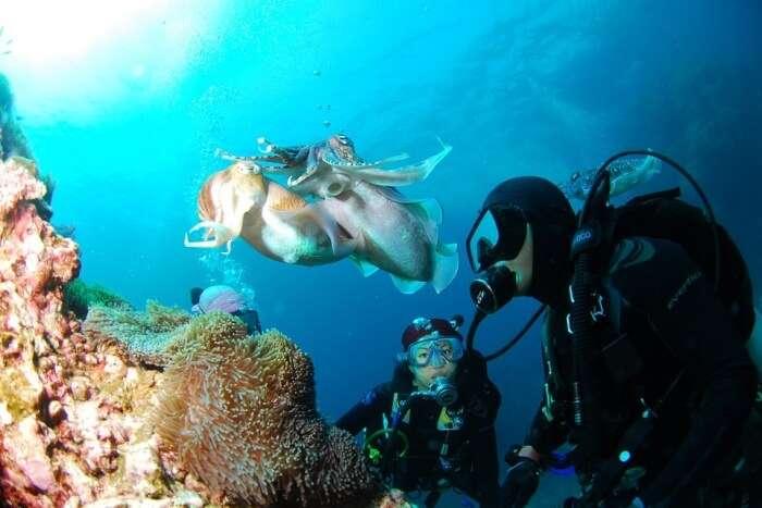 Go Scuba Diving In Zanzibar