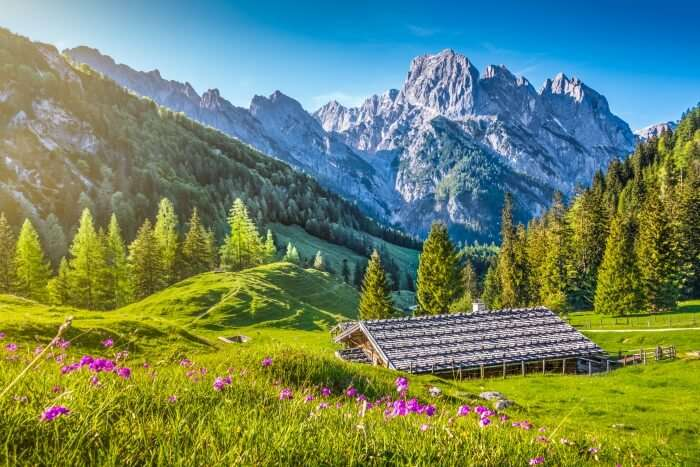 swiss national park cover
