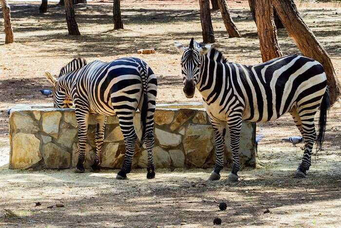 Best Zoos In Turkey