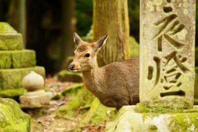 Exotic Wildlife of Japan