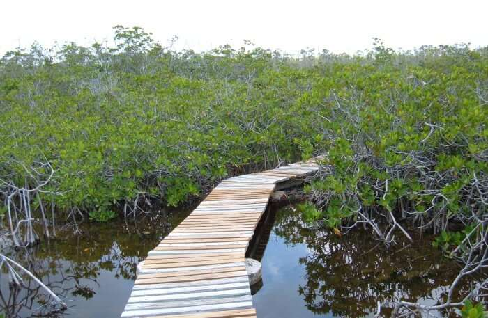 Abaco National Park