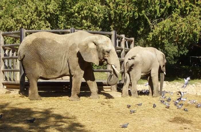 About-Ramat-Gan-Safari-Park-2nd