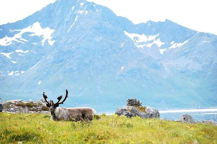 About Wildlife In Norway
