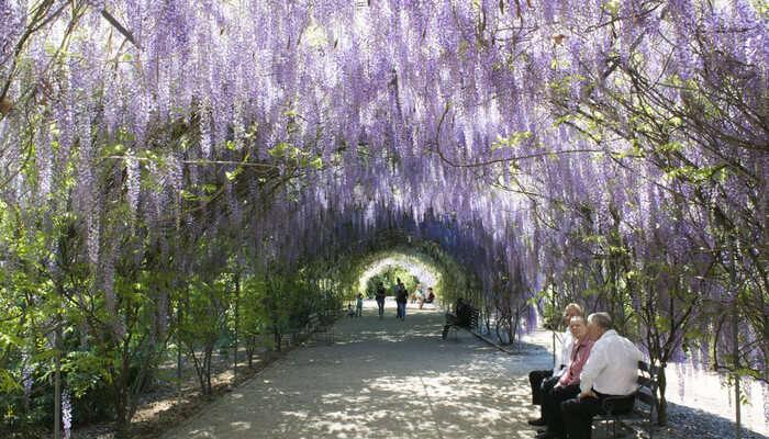 Adelaide botanical garden