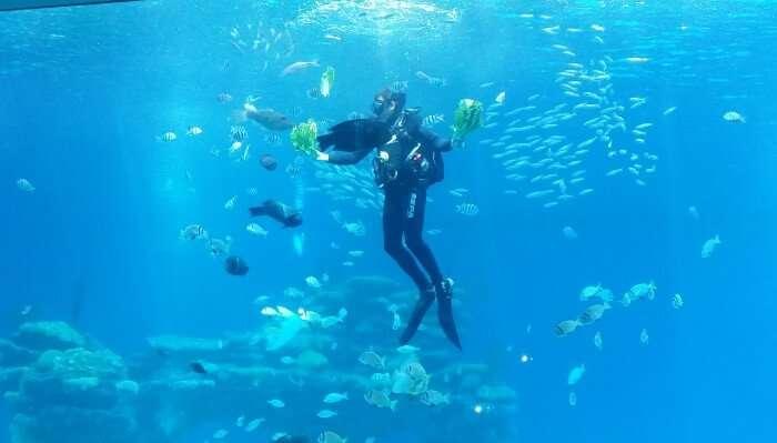 Go Scuba Diving In Bangkok