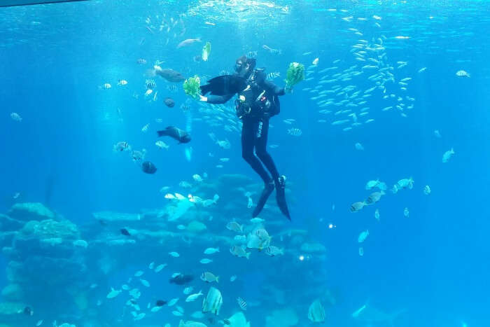 Best Time To Go Scuba Diving In Israel