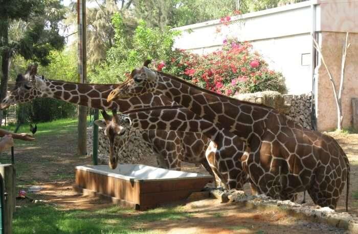 Best Time To Visit Ramat Gan Safari In Israel