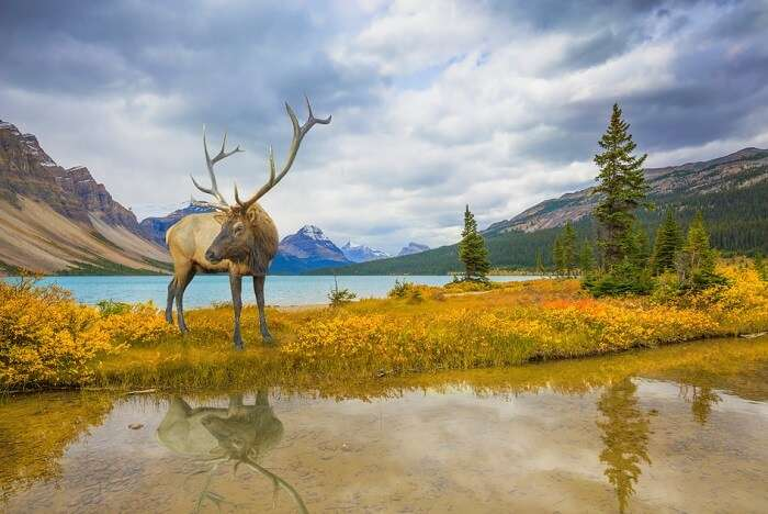 Canada safaris cover