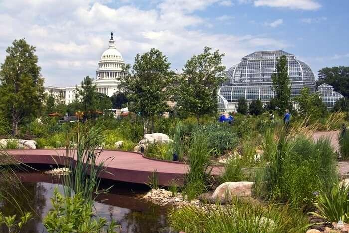 Flora At Botanic Garden