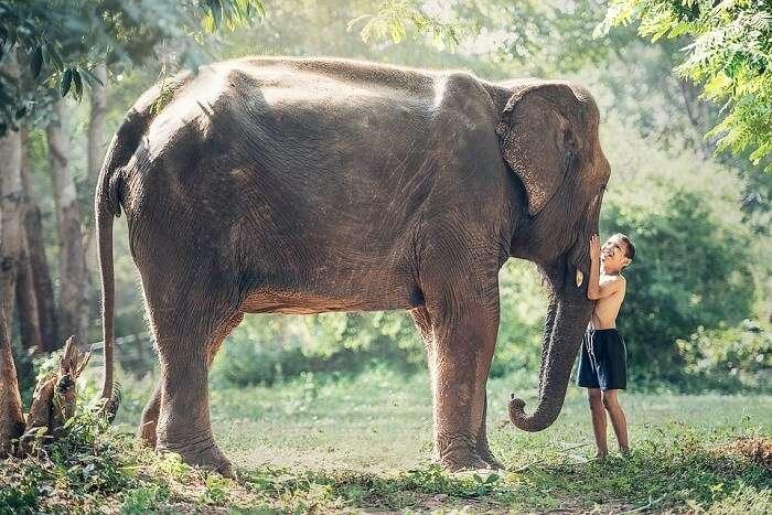 Siem Reap Wildlife