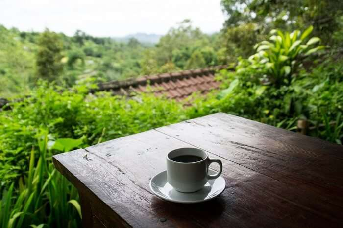 coffee plantation in bali pulina