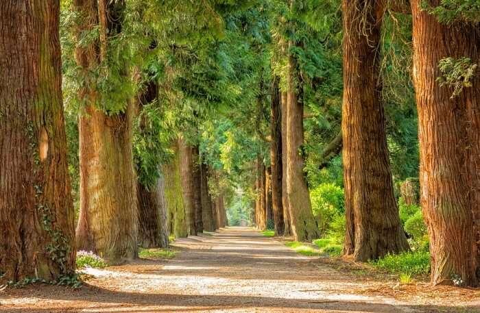 Dunggir National Park