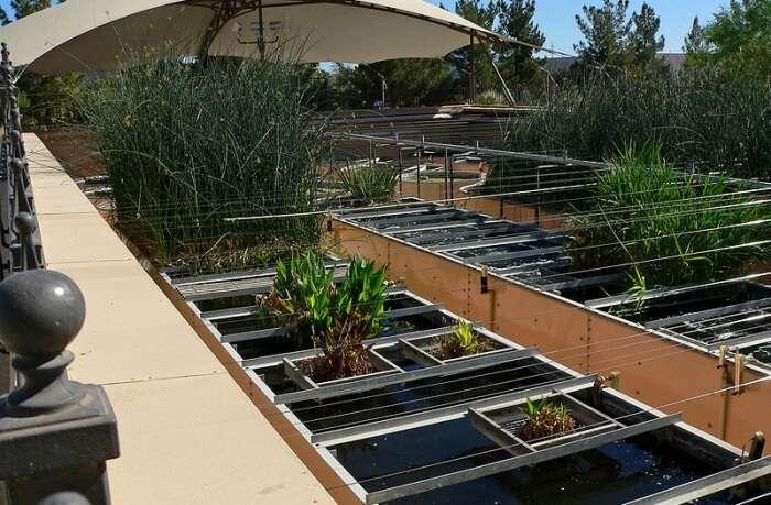 Ethel M's Chocolate Factory & Cactus Garden