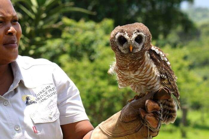 Go for African bird watching in the African Bird of Prey Sanctuary