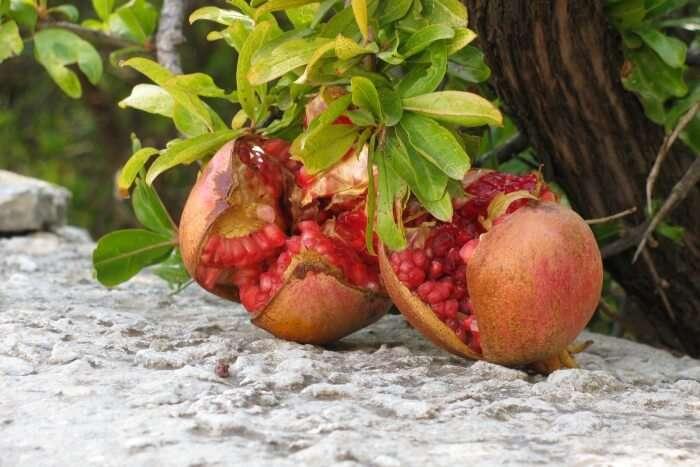 Hanging Pomegranate