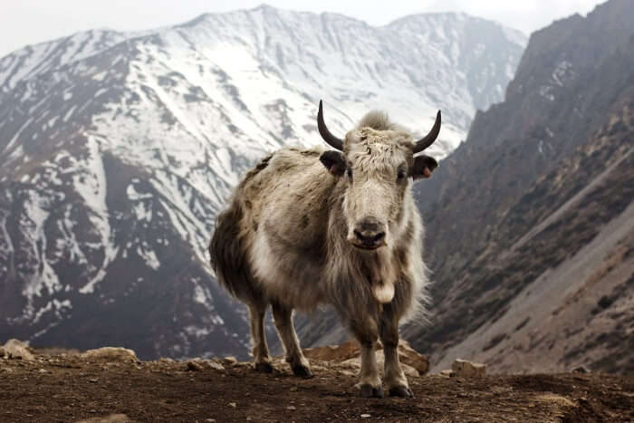 Is Annapurna Trek for everyone