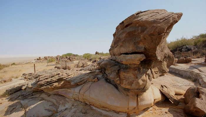 Kutch Fossil Park