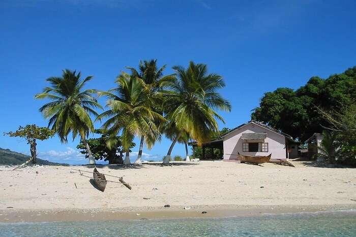 Tropic Island Coconut tree