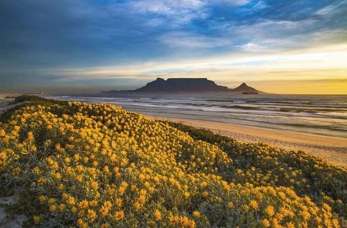 National Parks In Cape Town Cover