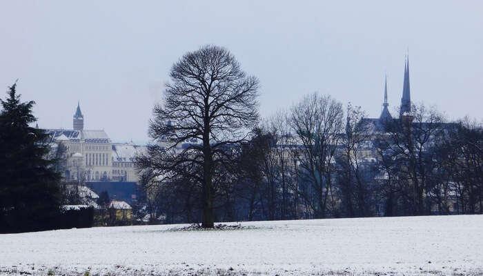 Participate In The Winter Celebrations