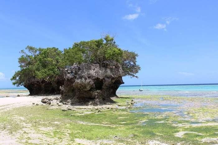 Ocean Pemba Island Sea Sun Vacation Holiday Water