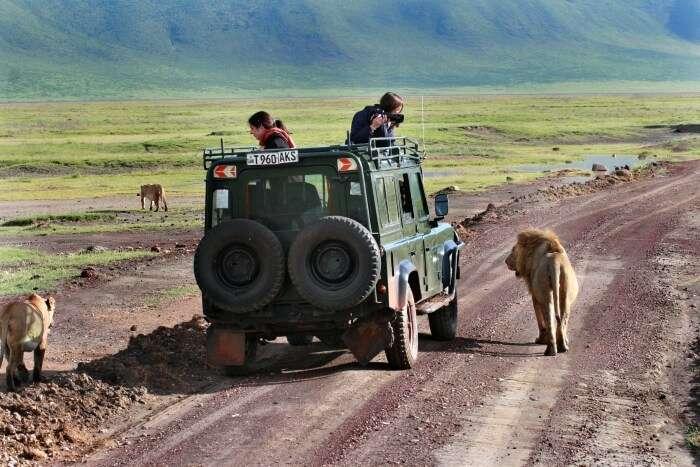 Safaris In Cape Town